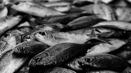 [ENC049] El enigma de los peces menguantes